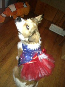 Happy July 4th from Willow!